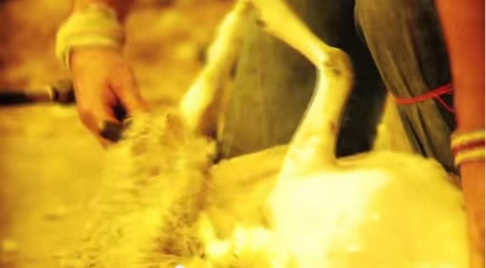 Du mouton à la laine... Aubusson / Felletin dans la Creuse